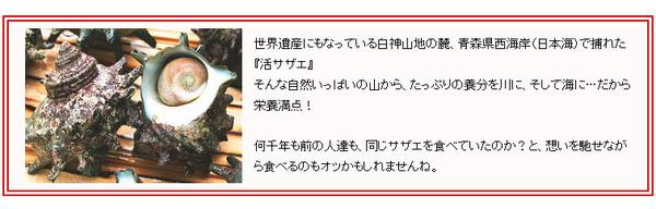 青森県産『白神サザエ』20個