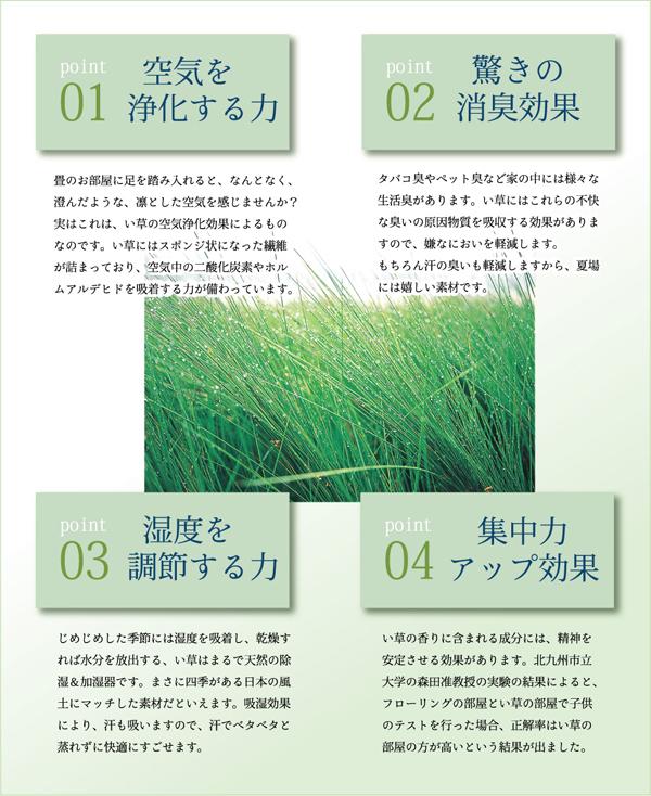 純国産/日本製 イ草花ござカーペット 『扇』 本間10畳(約477×382cm)
