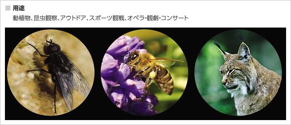 マクロスコープ/遠近両用単眼鏡 【8倍】 コンパクト/曇り防止 ミノックス 【日本正規品】 マクロスコープMS8×25