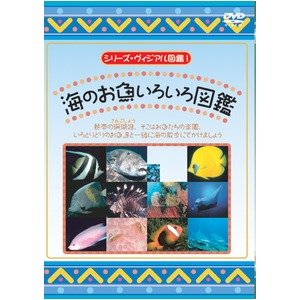 KIDSお魚博士DVD4本セット+オマケ付!