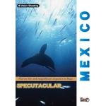 厳選!世界の海DVD4本セット+オマケ付!