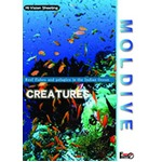 厳選!世界の海DVDセット