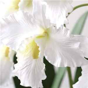 光触媒カトレア ホワイト