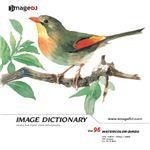 写真素材 imageDJ Image Dictionary Vol.96 鳥 (水彩画)