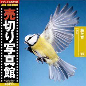 写真素材 売切り写真館 JFI Vol.029 鳥たち Birds
