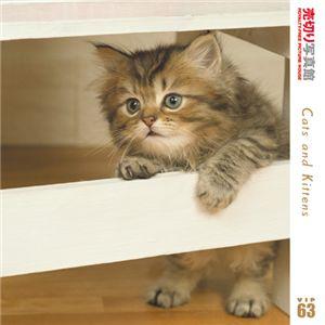 写真素材 売切り写真館 VIP63 猫ちゃんたち