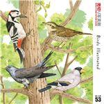 写真素材 売切り写真館 VIP53 世界の鳥
