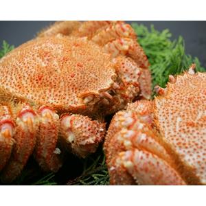 蟹ミソの王様 毛ガニ2尾セット