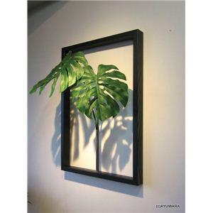 《リーフパネル》F-style Tuinie (エフスタイル・ツイーニー)Philodendron bipinnatifidum(セローム ヒトデカズラ)