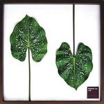 風景専門店あゆわら 《リーフパネル》Elephant ear leaf(エレファント イア リーフ) タイプ2 【サイズ 625x625x30mm】
