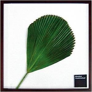 風景専門店あゆわら 《リーフパネル》Vanuatu fan palm(バヌアツ ファン バーム) タイプ2 【サイズ 525x525x30mm】