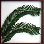 風景専門店あゆわら 《リーフパネル》Elaeis guineensis(ギニアアブラヤシ) タイプ3 【サイズ 625x625x30mm】