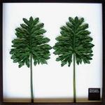 風景専門店あゆわら 《リーフパネル》Philodendron bipinnatifidum(セローム ヒトデカズラ) タイプ3 【サイズ 625x625x30mm】