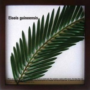 風景専門店あゆわら 《リーフパネル》Elaeis guineensis(ギニアアブラヤシ) タイプ4 【サイズ 325x325x20mm】