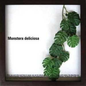 風景専門店あゆわら 《リーフパネル》Monstera deliciosa(モンステラ デリシオサ) タイプ19 【サイズ 325x325x20mm】