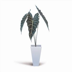 風景専門店あゆわら 《人工観葉植物・造花》Alocasia Amazonica(アロカシア アマゾニカ)