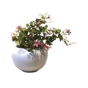 風景専門店あゆわら 《造花・花瓶》F-style vase Violet wood-sorrel(バイオレット ウッド ソレル(ムラサキカタバミ))