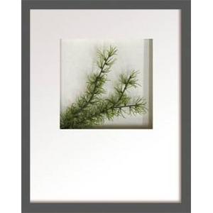 風景専門店あゆわら 《リーフアート》Hana concept frame Pine spray(松の枝)