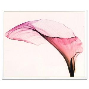 風景専門店あゆわら 《X-Ray(X線) アートフレーム》Giant Calla(ジャイアント カラー) Steven N.Meyers(スティーブン・マイヤーズ)