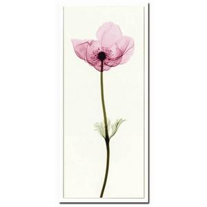 風景専門店あゆわら 《X-Ray(X線) アートフレーム》Anemone I(アネモネ) Steven N.Meyers(スティーブン・マイヤーズ)