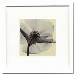 風景専門店あゆわら 《X-Ray(X線) アートフレーム》Hellebore(small)(ヘレボルス) Steven N.Meyers(スティーブン・マイヤーズ)