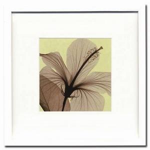 風景専門店あゆわら 《X-Ray(X線) アートフレーム》Hibiscus(small)(ハイビスカス) Steven N.Meyers(スティーブン・マイヤーズ)