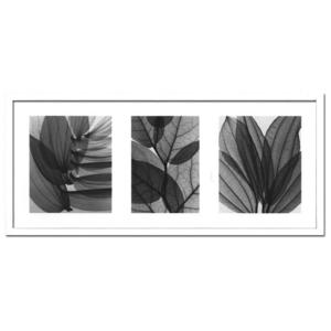 風景専門店あゆわら 《X-Ray(X線) アートフレーム》Leaf Collection(リーフコレクション) Steven N.Meyers(スティーブン・マイヤーズ)