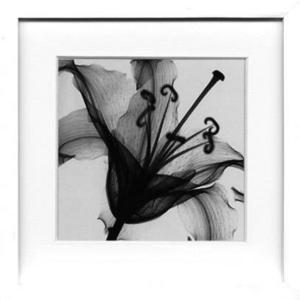 風景専門店あゆわら 《X-Ray(X線) アートフレーム》Lily Muscadet(リリー ミュスカデ) Steven N.Meyers(スティーブン・マイヤーズ)