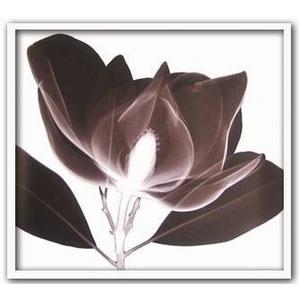 風景専門店あゆわら 《X-Ray(X線) アートフレーム》Magnolia(マグノリア) Steven N.Meyers(スティーブン・マイヤーズ)