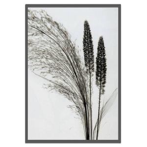 風景専門店あゆわら 《X-Ray(X線)アートフレーム》Broom Grass(エニシダ草) Steven N.Meyers