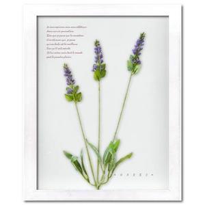 風景専門店あゆわら 《プラント アートフレーム》Herbe frame  【lavender】 ラベンダー