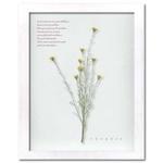 風景専門店あゆわら 《プラント アートフレーム》Herbe frame  【Wild mini daisy】 ワイルド ミニ デイジー