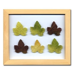 風景専門店あゆわら 《プラント アートフレーム》Grape Leaf(グレープリーフ)