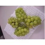 長野県産ぶどう(ロザリオ ビアンコ) 2kg(4〜5房)
