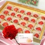 【遅れてごめんね、お母さん】メッセージカード付き さくらんぼ佐藤錦24粒と生花カーネーションのセット