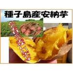 種子島産安納芋 5kg ≪送料無料≫