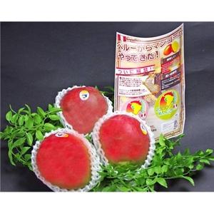 ペルー産 ロシオマンゴー 5個入り(1個 約250g)