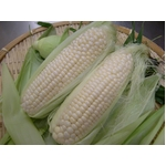 北海道産!白いトウモロコシのピュアホワイト2L【10本入】