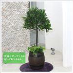 人工観葉植物 オリーブツリー 小 125cm
