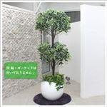 人工観葉植物 カポック 白縁 ヤドリフカノキ 150cm