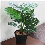人工観葉植物 モンステラ 50cm