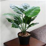 人工観葉植物 ポトス 50cm