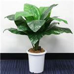 人工観葉植物 スパティフィラム 80cm
