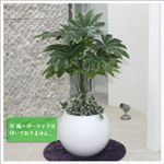 人工観葉植物 ヤツデ 105cm