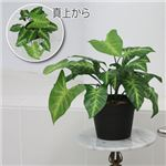 人工観葉植物 クワズイモ 45cm