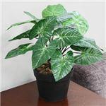 人工観葉植物 クワズイモ 緑 45cm