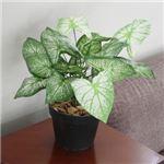 人工観葉植物 クワズイモ 白斑 45cm
