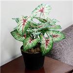 人工観葉植物 カラジューム 45cm