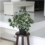 人工観葉植物 アイビー 白斑 50cm