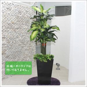 人工観葉植物 ディフェンバキア 130cm